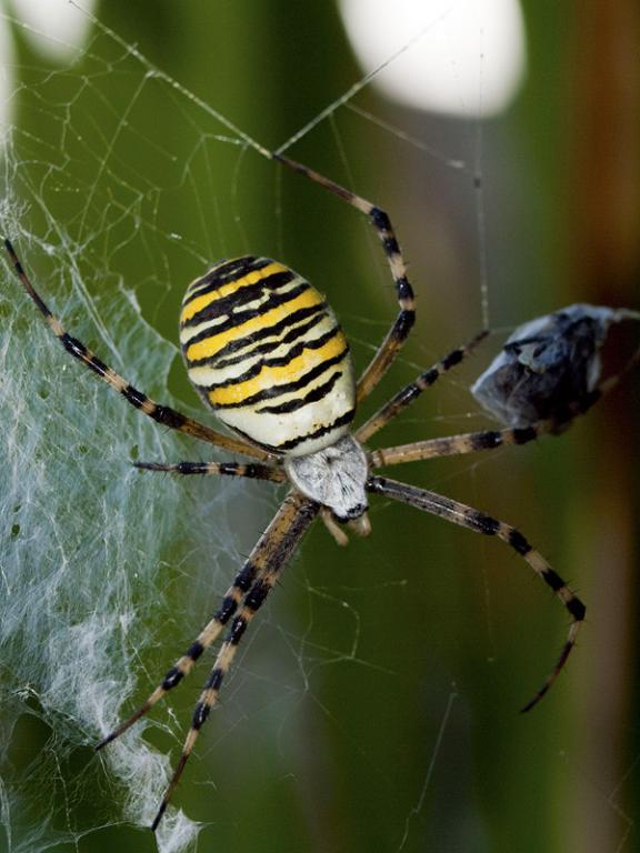 araignée24.jpg