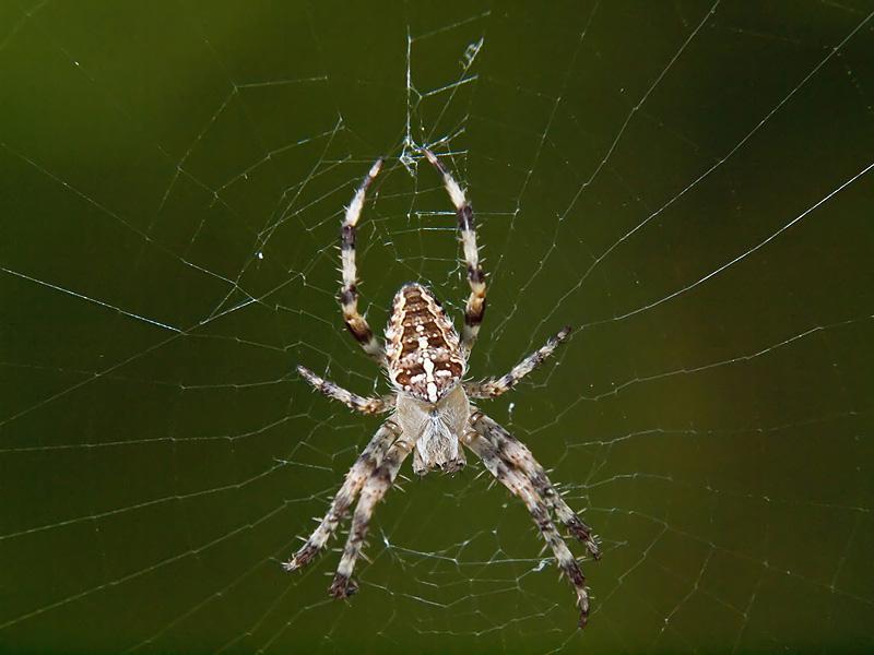 araignée12.jpg