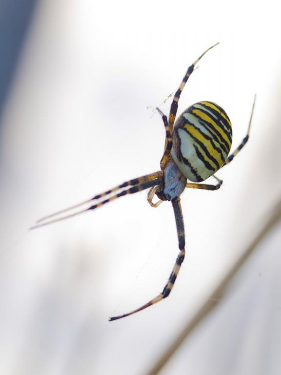araignée25.jpg