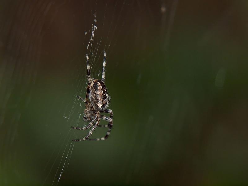 araignée11.jpg
