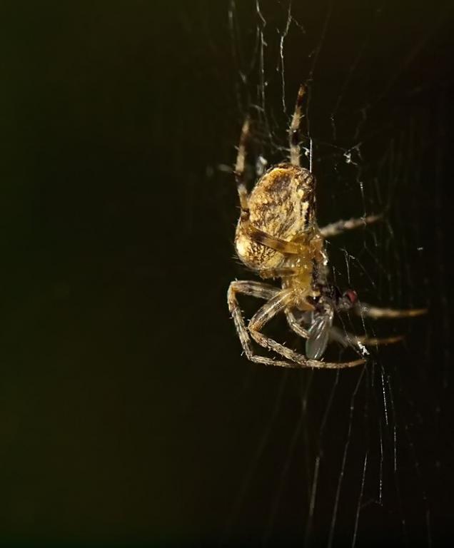 araignée10.jpg