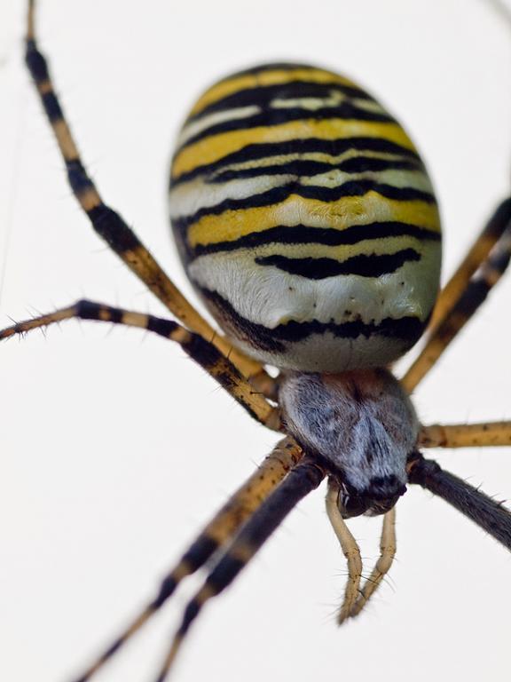 araignée100.jpg