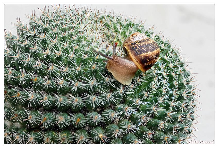 Cactus_5_850_PMax.jpg