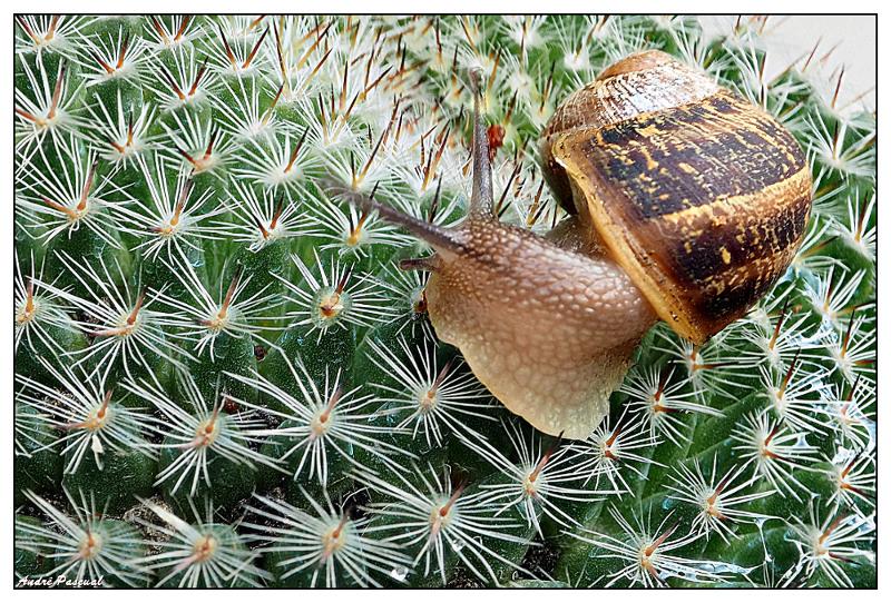 Cactus_5_800_PMax.jpg
