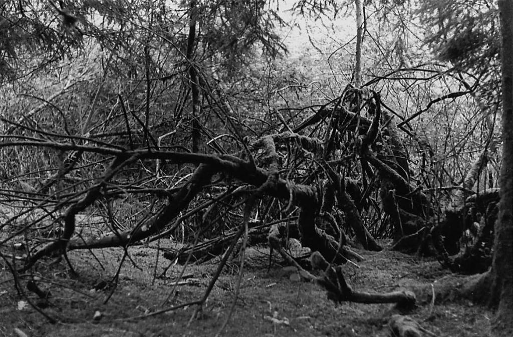 arbre 1 baffour.jpg