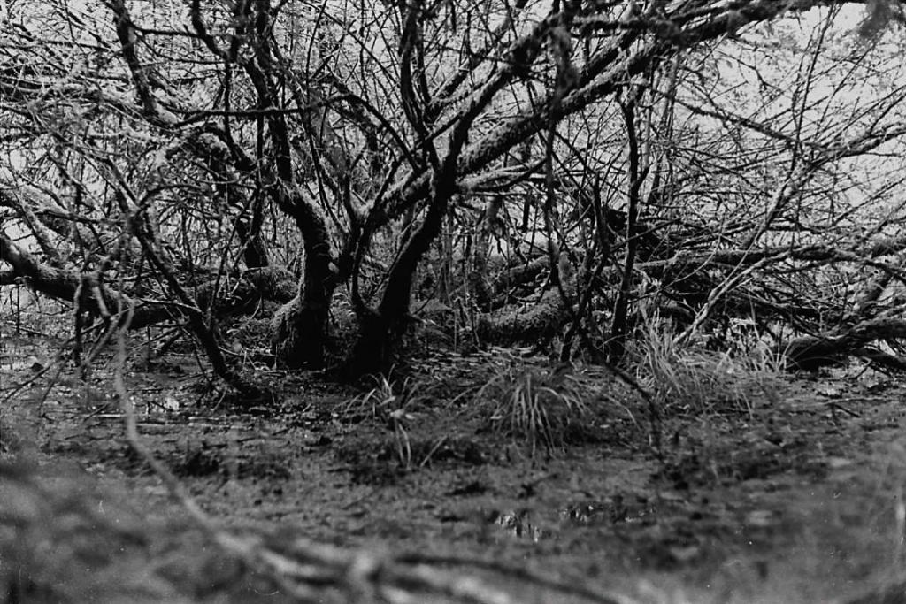 arbre 2 baffour.jpg